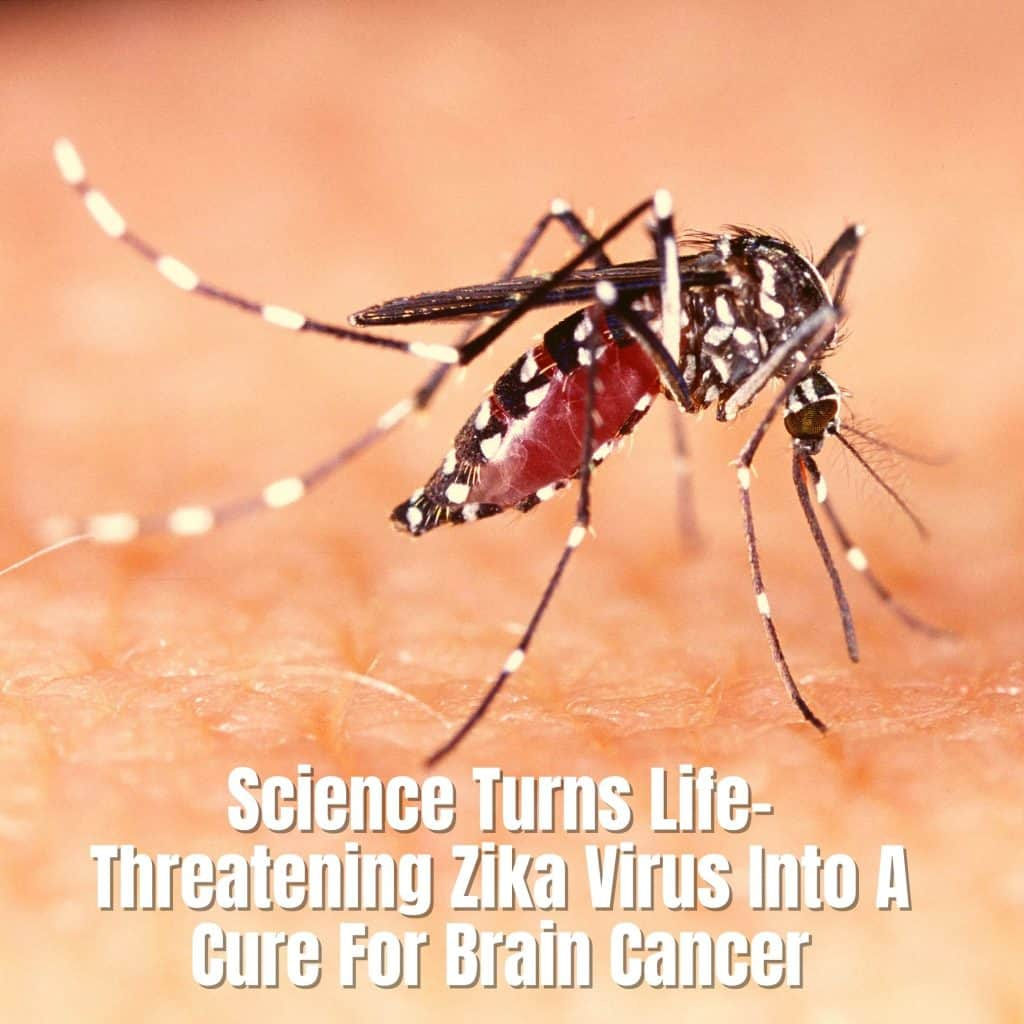 Science Turns Life-Threatening Zika Virus Into A Cure For Brain Cancer
